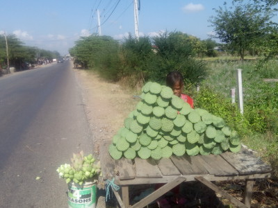 Selling Lotus Flower Heads
