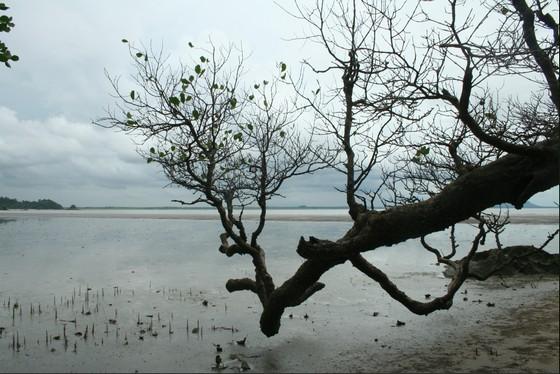 bako-mangroves