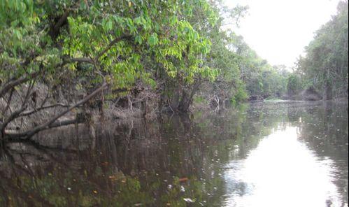 Sungai Kinabatangan river trip